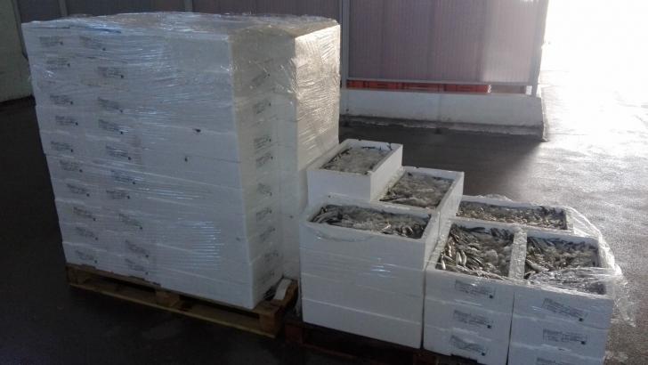 Resultado de imagem para Apreensão de 300 kg de biqueirão por fuga à lota na Gafanha